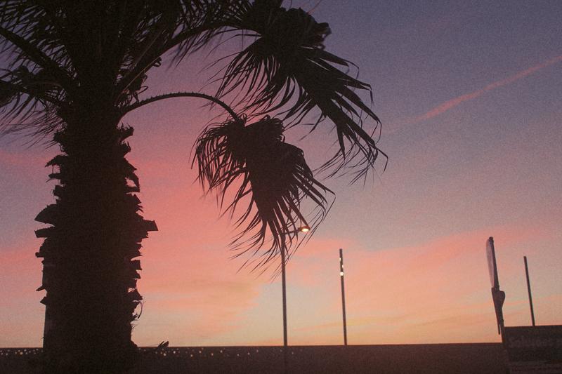 _7-lisbon-palmtree-beachcc-13