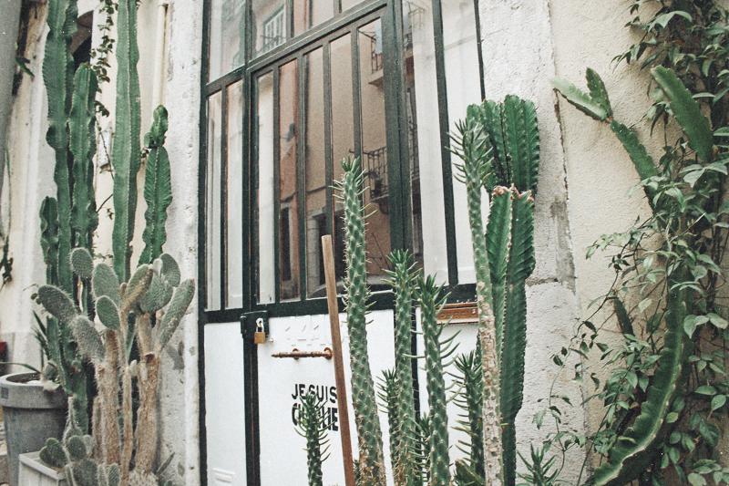 lisbon-cactus
