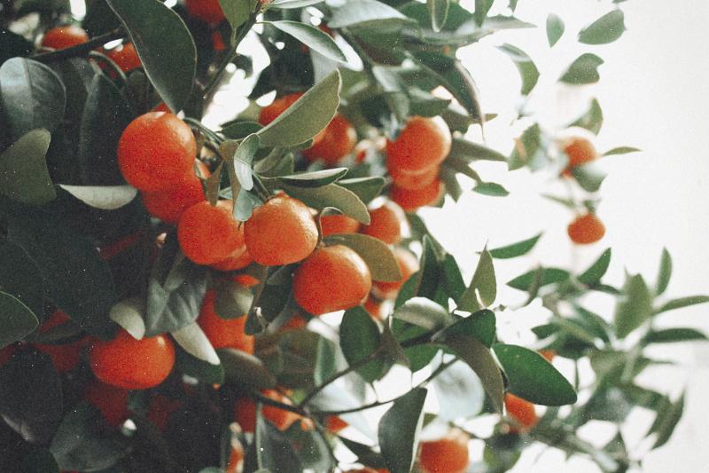 lisbon-oranges