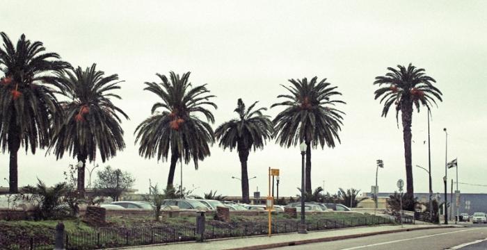 lisbon-palmtreesLSB-F3Lisbon-overview-lofi-fuji-8