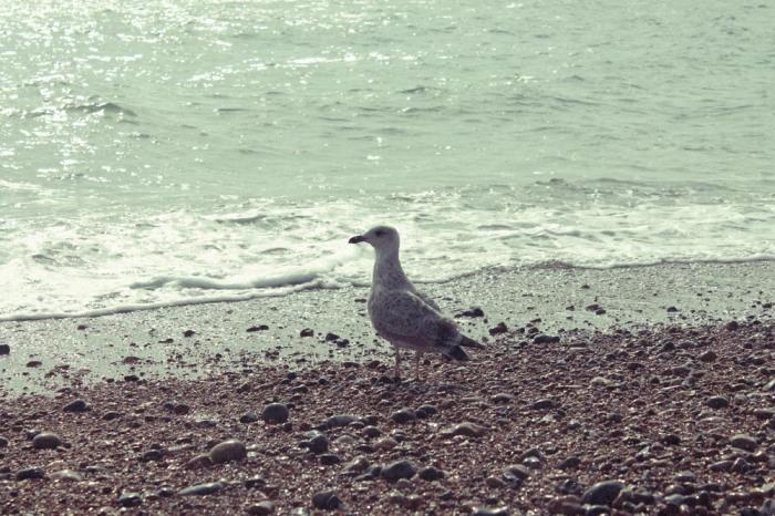 15-Brighton