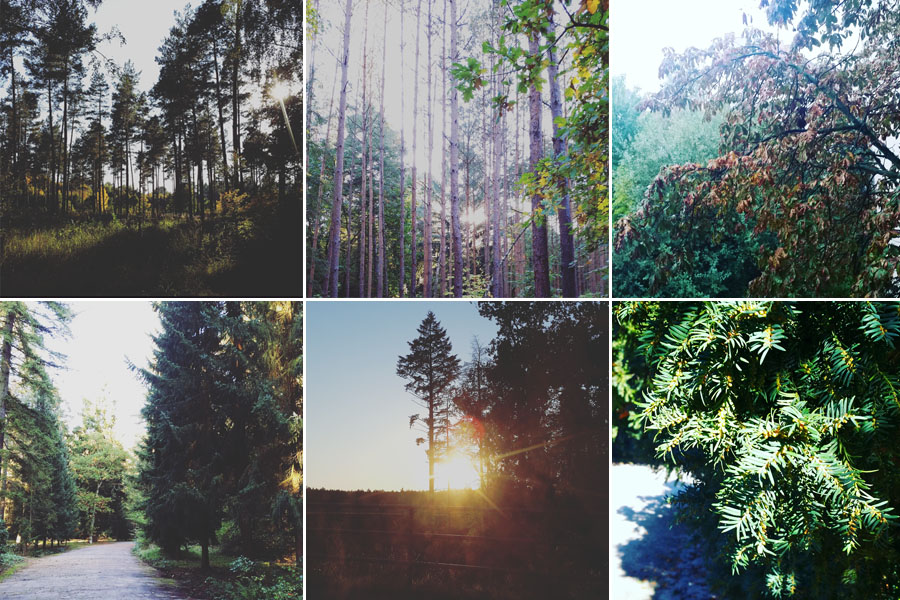 Herbst-2015-Wald-Tanne-Tannenliebe