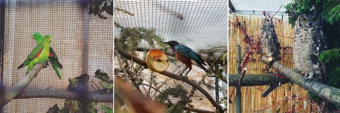 putzige-piepmätze-vogelausstellung-botanischer-garten
