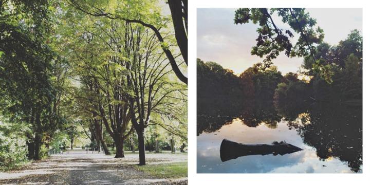 Allein im Park, Grünzeug genießen (solange es noch grün ist!)