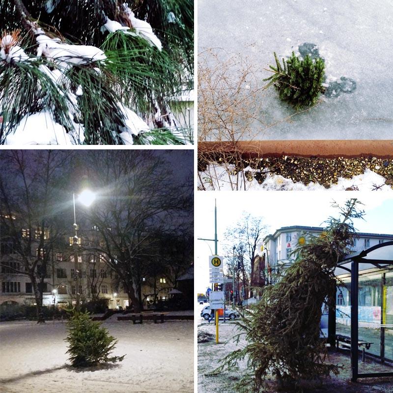 entsorgte-tannenbäume-in-berlin