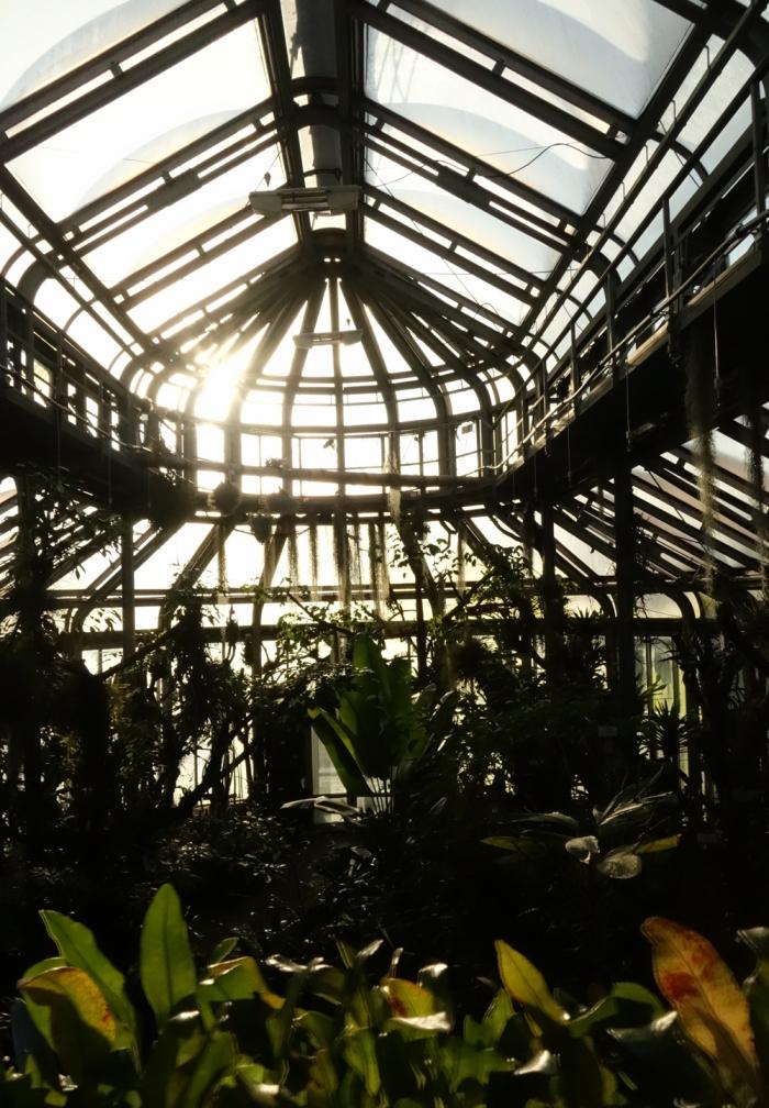 botanischer-garten-berlin-gewa%cc%88chshaus-pflanzenliebe