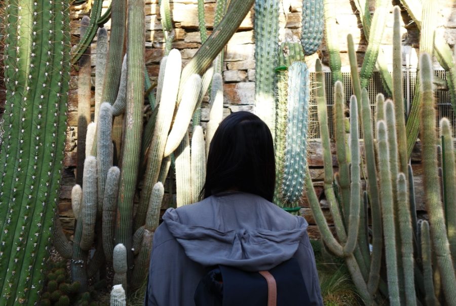 botanischer-garten-berlin-kaktus-liebe