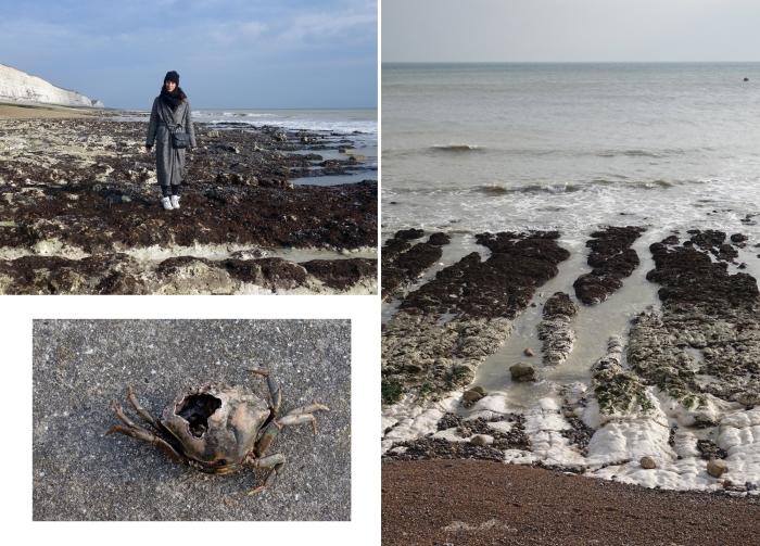 brighton-cliffwalk-crab
