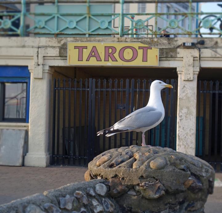 Tarot-Möve